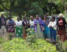 AgReach Malawi field day